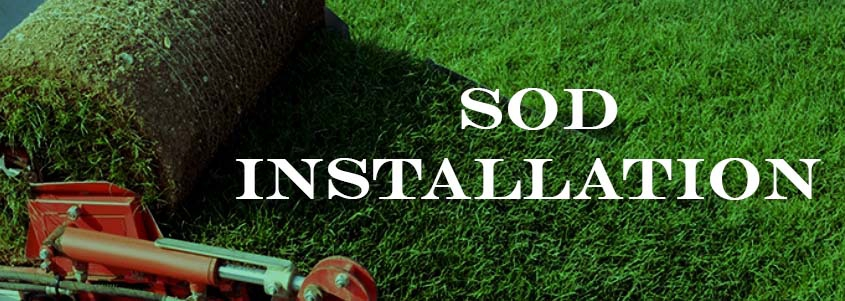 Sod Install & Maintenance