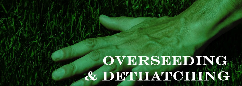 Overseeding & Dethaching